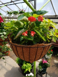 COCOA HANGING BASKET  from Kircher's Flowers in Defiance and Paulding, OH