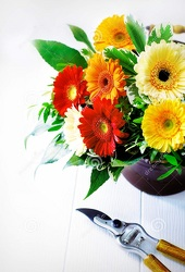 Designers Choice Gerbera Daisy Arrangement from Kircher's Flowers in Defiance and Paulding, OH