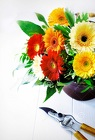 Designers Choice Gerbera Daisy Arrangement