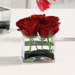 Roses in Glass Cube from Kircher's Flowers in Defiance and Paulding, OH