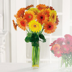 Gerbera Garden from Kircher's Flowers in Defiance and Paulding, OH