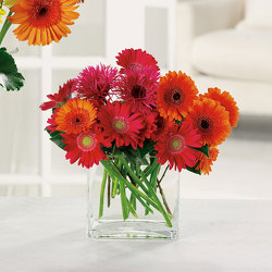 Charming Gerberas from Kircher's Flowers in Defiance and Paulding, OH