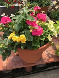 Combination Planter  from Kircher's Flowers in Defiance and Paulding, OH