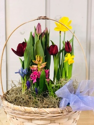 Beautiful Spring Garden from Kircher's Flowers in Defiance and Paulding, OH