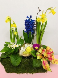 Joy Of Spring  from Kircher's Flowers in Defiance and Paulding, OH
