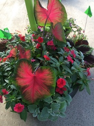 Combo Pot for Shade from Kircher's Flowers in Defiance and Paulding, OH