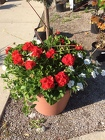 Combo Pot for Sun from Kircher's Flowers in Defiance and Paulding, OH