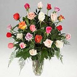 Two Dozen Mixed Roses from Kircher's Flowers in Defiance and Paulding, OH