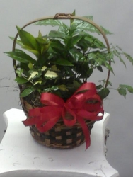 Small Planter from Kircher's Flowers in Defiance and Paulding, OH