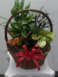 Medium Planter from Kircher's Flowers in Defiance and Paulding, OH
