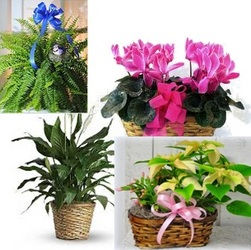 Plants by the Month (12 Months) from Kircher's Flowers in Defiance and Paulding, OH